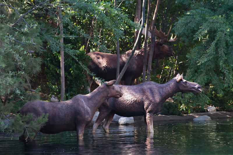Moose on the Rivers of America