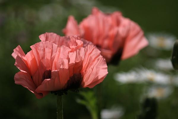 Flowers_060510_0151.JPG