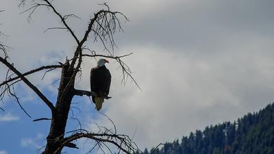 Hawks & Eagles
