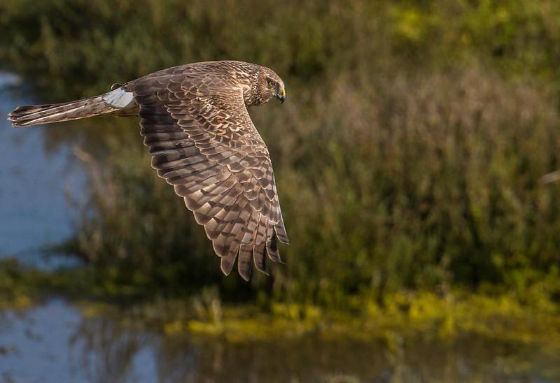 HNBH Birds1-15.jpg