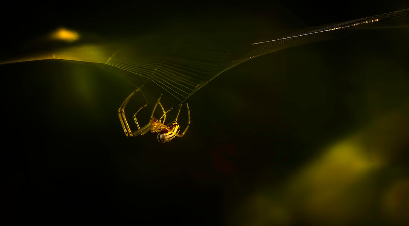The Magic of Light-035.jpg