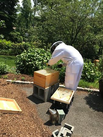Three BeeHive Management June 22 2017