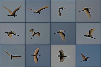 Dauphin Island 2011-08-11 Birds