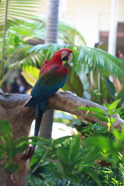 Kauai_D5_AM 200.jpg