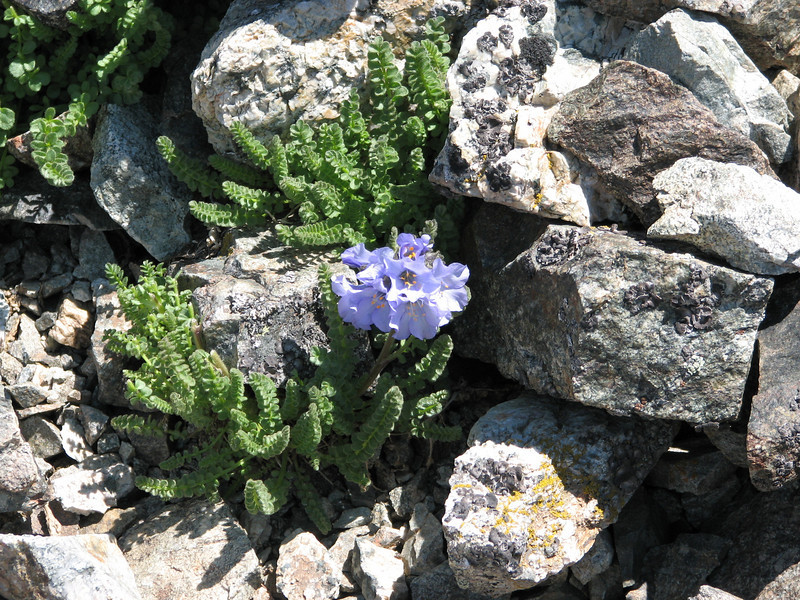 Torreys Peak 7-13-06 155.jpg