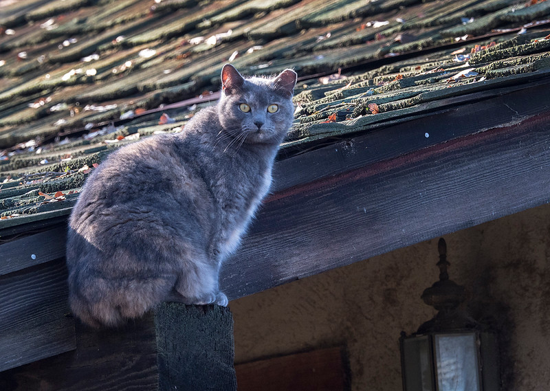 trail cat.jpg
