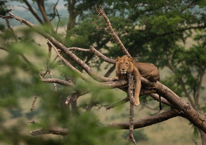 Uganda_T_QE-1141.jpg