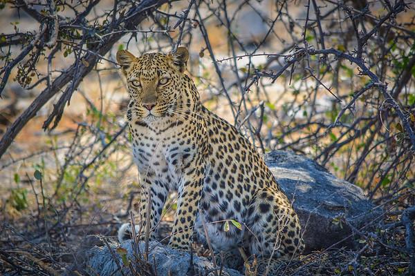 Namibia Animals