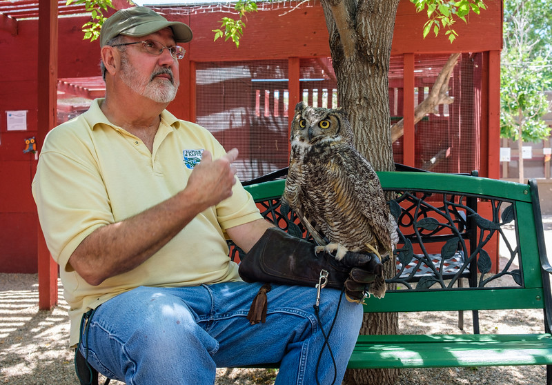 Guffy, the Great Horned Owl