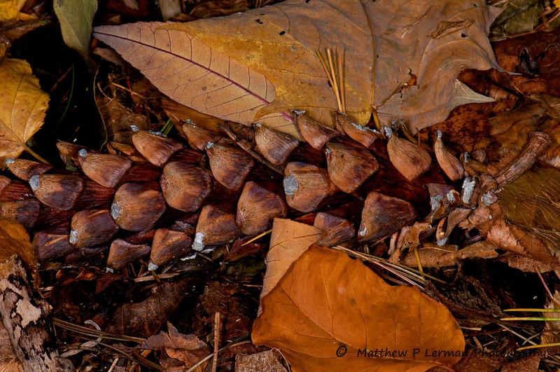 Leaf Litter VT_8969.jpg