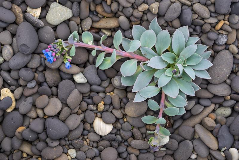010-Wildflower.JPG