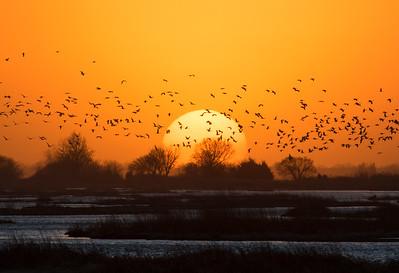 Nebraska cranes 2015