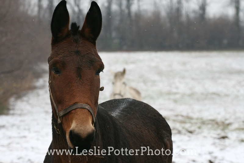 Kentucky Equine Humane Center, Nicholasville, KY. December 2009