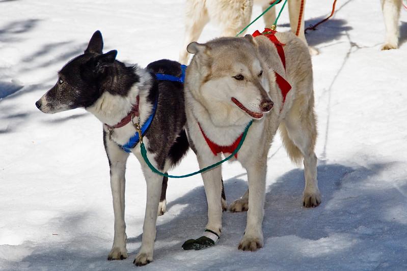 DogSled-114.jpg