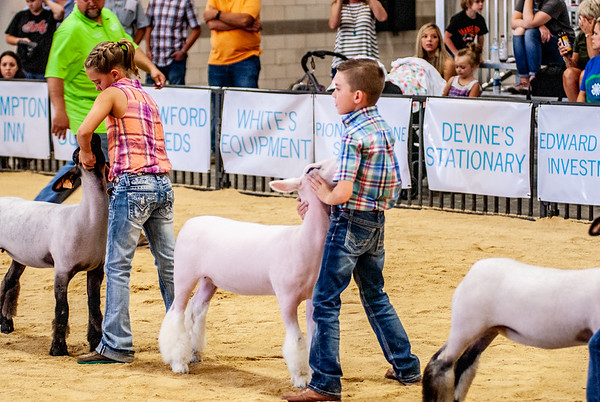 Great Western Shootout Sheep