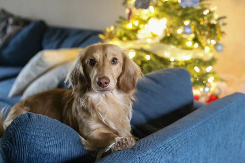 2019-12-22_ChristmasDecor-4446.jpg