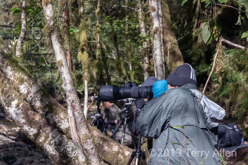 Photographing bears