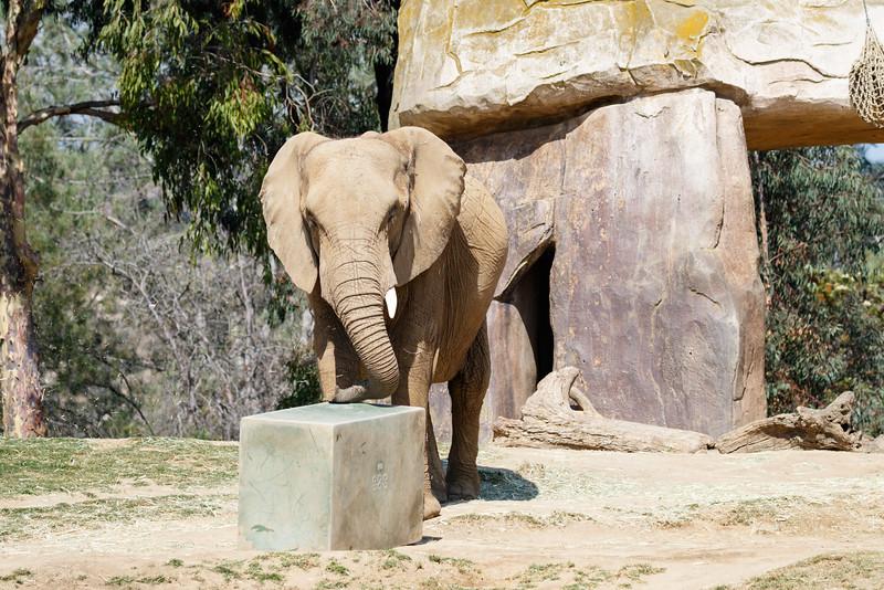 2016.06.01 Safari Park 0283.jpg