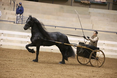 85A. Pleasure Driving Horse Stake Any Breed