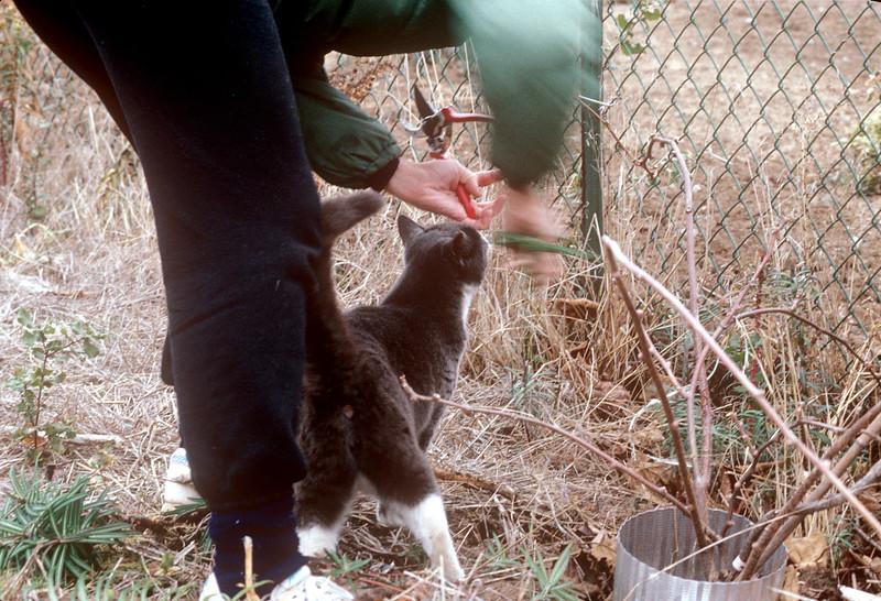 1991-01 Chris & Mr. Kitty 111 Vaca Creek Way.jpg