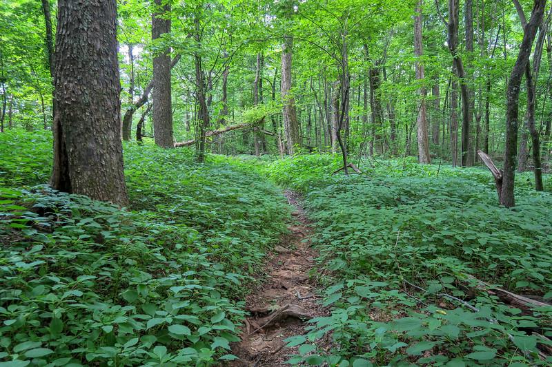 Barnett Branch Trail -- 3,880'