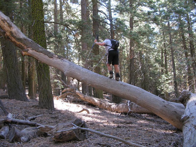 shortcut across the log crossing