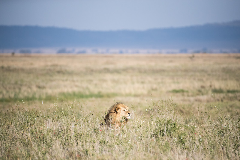 Africa - 101716 - 6714.jpg