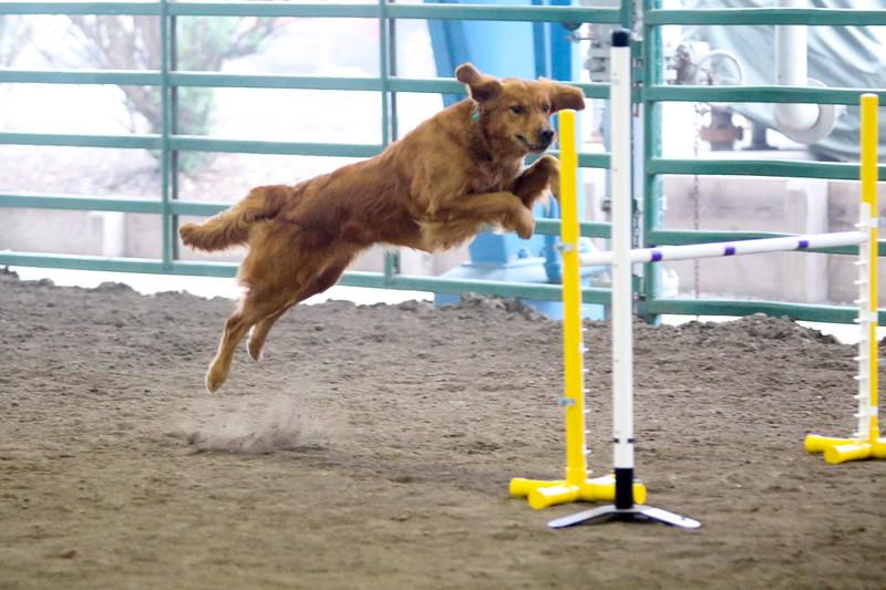 3-15-2015 Bloodhound-9828.jpg