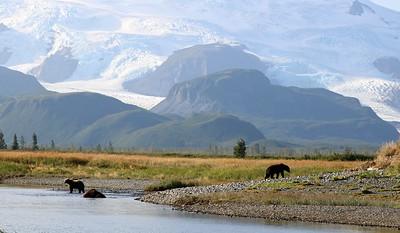 Katmai National Park & Preserve: BEARS!