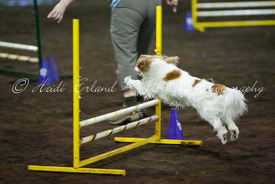 RAT ASCA - Jumpers Open Round 2 - 10/08/11