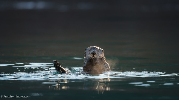 Otters and Sea Lions