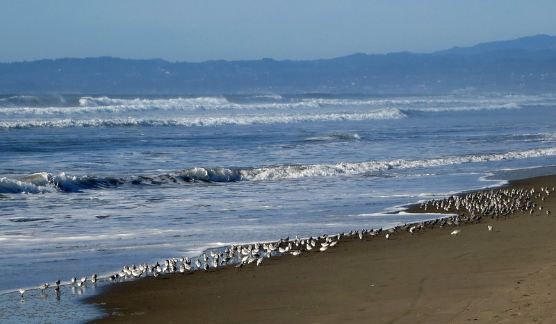 Shorebirds 0154.jpg