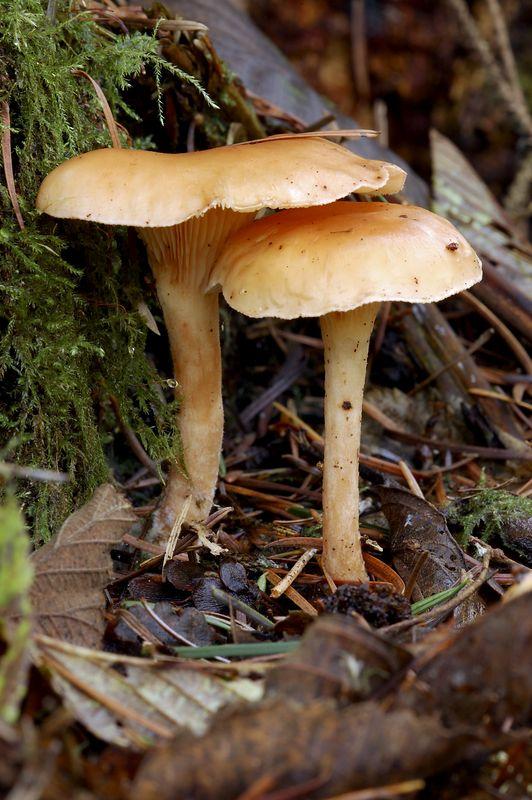 mushroomstwo.jpg