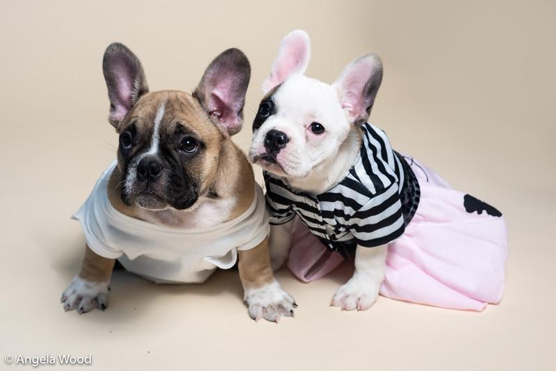 Puppies21.jpg
