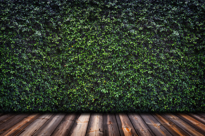 Hedge Wall.png