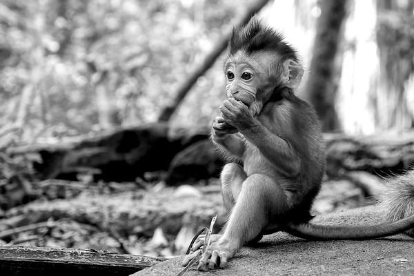 Monkeys ( B/W)
