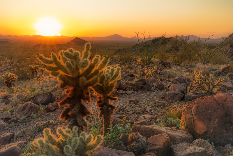 Kofa Mountains AZ 2020-8.jpg