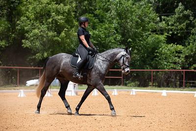Horse 241
