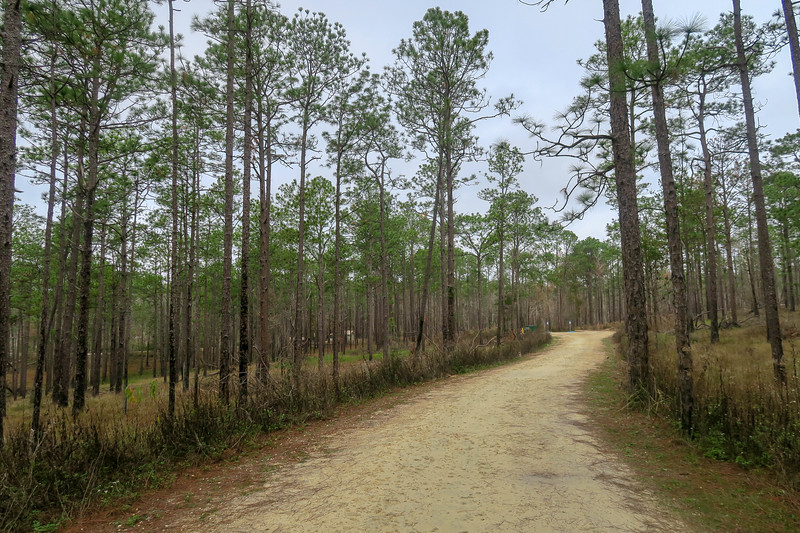 Wiregrass Trail / Turtle Lake Access Road