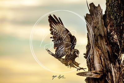 Birds or Trinidad & Tobago