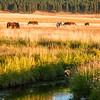 Elk Creek, Montana