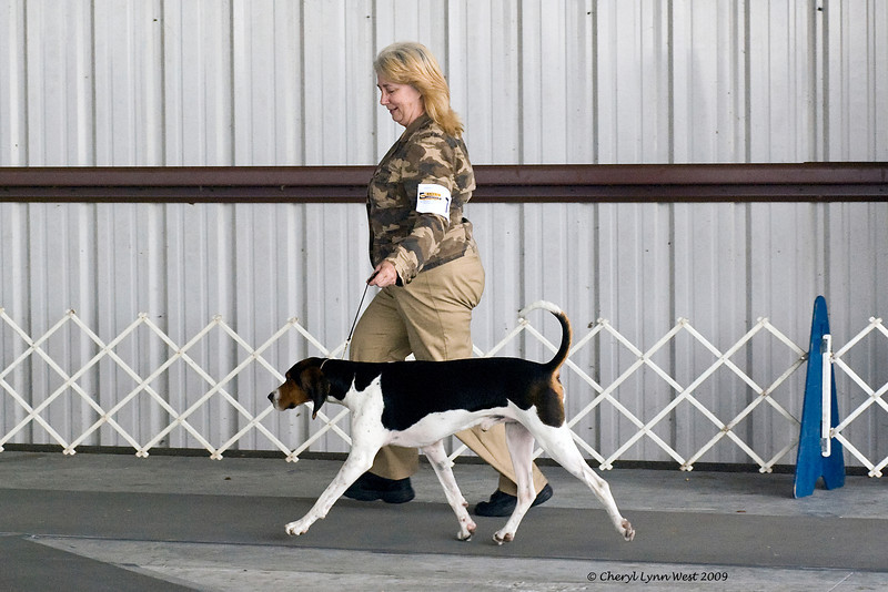 CSG Bolt Action High Roller, a Treeing Walker Coonhound, took Best in Show Miscellaneous class.  Gator is owned by BonnieLynne Davis.