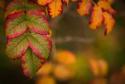 Terschelling herfst