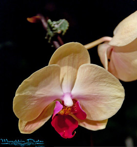 Orchids 2011