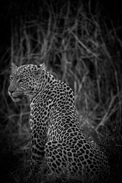 Botswana_June_2017 (3537 of 6179).jpg