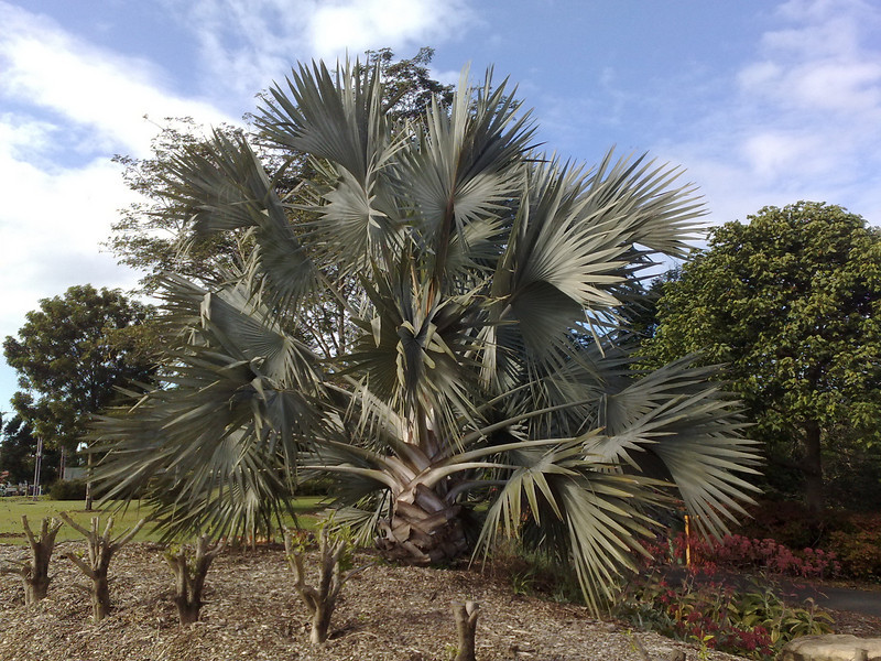 20090620_0906_496 Mackay Botanical Gardens