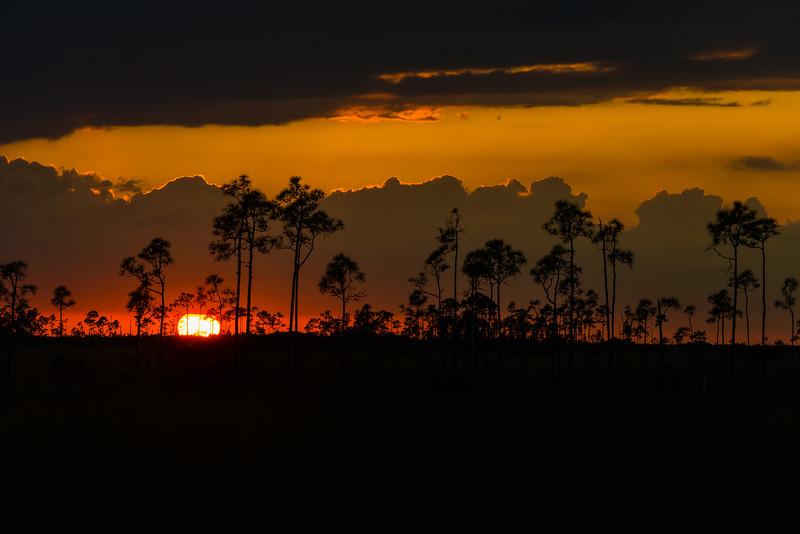 Everglades (20 of 37).jpg