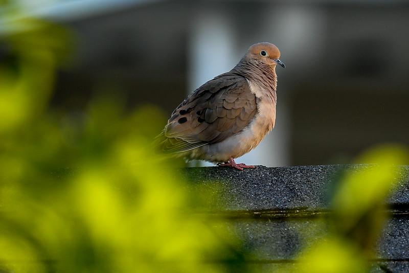 21MayHummingbirds (28 of 53).jpg