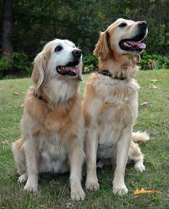 Bonnie and Dakota