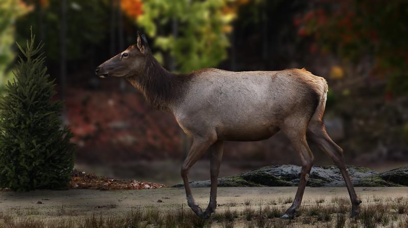 omega-deer.jpg